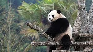 chambre d hote pres du zoo de beauval chambre d hote proche zoo de beauval beautiful chambre d h tes de