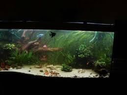 aquariums meubles petites annonces gratuites occasion