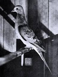 Bird Lore 1913 14562557107