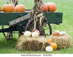 Pumpkin Patches Near Dallas Tx 2015 by San Antonio Area Of Texas Pumpkin Patches Corn Mazes Hayrides