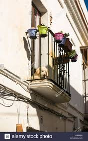100 Tarifa House Balcony With Dog Spanish House Andalusia Costa De