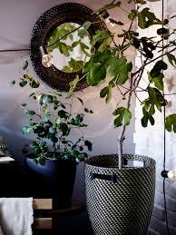 löse die grenzen zwischen innen und außen mit pflanzen auf