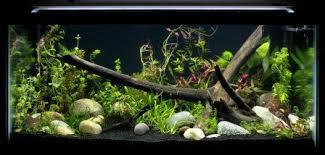 what s the best led grow lights for aquarium plants home aquaria