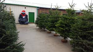 Xmas Tree Watering Devices by How To Care For Your Real Christmas Tree Embleys Nurseries