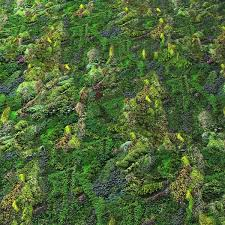 Texture Other Green Wall Seamless