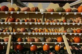 Worlds Heaviest Pumpkin In Kg by Pumpkin Dinosaurs Galore Dinosaurpalaeo