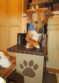 Bailey Chair Megaesophagus Instructions by 10 Best Dog High Chair Images On Pinterest Doggies A Dog And
