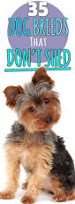 All Dog Breeds That Dont Shed by 200 Best Puppies Images On Pinterest Raw Dog Food Dogs And Dog