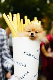Free Halloween Things To Do In Nyc by Best 25 Best Dog Costumes Ideas On Pinterest Best Dog Halloween