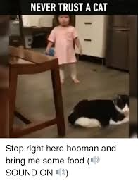 cat stop never trust a cat stop right here hooman and bring me some food