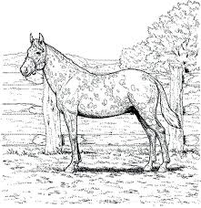 Adult Horse Coloring Pages Horseshoe Crab And Carriage Free