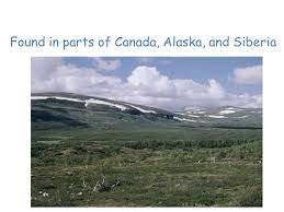 land biomes tundra found in parts of canada alaska and siberia