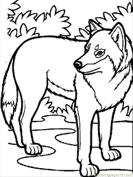 Coloring Pages Wolf 01 Mammals