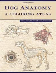 Dog Anatomy A Coloring Atlas Spi Edition