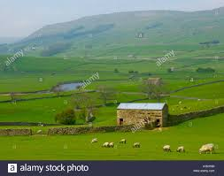 River Ure, Sheep And Field Barns In Upper Wensleydale, Near Hawes ... Britespan Building Systems Inc Fabric Buildings The Barn At Gibbet Hill Traditional Corsican Sheep Barns With Pool 10 Km From Porto Spherds Way Farms Build The Barns Grow Flock By Steven Acvities For Children High Park Shed Books Plan Choice Sheep Barn Plans Designs And Farm Structures Waterford Vermont Maremma Sheepdog Herding Finndorset Stone Center Youtube Horizon Prefab Shedrow Can Easily Be Adapted