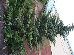 Prairie Pines Pumpkin Patch Wichita Ks by Orange Balls In My Cedar Tree The Demo Garden Blog