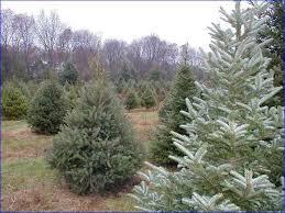 Christmas Tree Farm Near Lincoln Nh by Christmas Tree Farms In Nh Christmas Cards