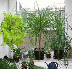 bei zimmerpflanzen aufs bio siegel achten