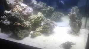 150 Gallon Tall Aquascaping Ideas For Reef Tank - YouTube Aquascape Designs Surripuinet Aquascaping Live Rocks In Your Saltwater Aquarium Columns A Saltwater Tank Callorecom Need Ideas General Rfkeeping Discussion Week 3 Aquascaping 120 Gal Rimless Update Youtube 55g Vertical Tank Ideas Saltwaterfish Forum Aquascape With Rocks Google Search Aquariums Pinterest Bring Back The Wall Rock News Reef Builders Walls For Building Tiger Fish Aquascapinglive Rock Help Tcmas Forums