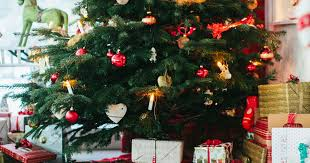Are Christmas Trees Poisonous To Dogs Uk by Is Your Christmas Tree Already Shedding Its Needles Here U0027s How To
