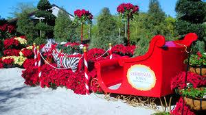 Busch Gardens Christmas Town — wild about plants