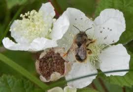 best bee plants