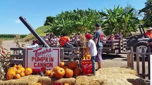 Tanaka Farms Pumpkin Patch by Pumpkin Cannon Tanaka Farms Youtube