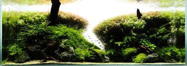 Analysis Of Viktor Lantos - Forest - ScapeFu Aquascape Of The Month June 2015 Himalayan Forest Aquascaping Interesting Driftwood Placement Aquascapes Pinterest About The Greener Side Aquascaping Design Checklist Planted Tank Forum Simons Blog Decoration Bring Nature Inside Home Ideas Downhill By Arie Raditya Aquarium 258232 Aquaria Creating With Earth Water Fire Air Space New Aquascapemarch 13 2016page 14 Page 8 Aquapetzcom Magical Youtube 386 Best Tank Images On Aquascape