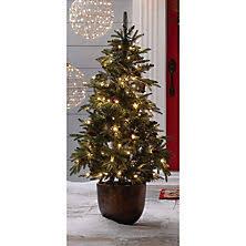 Plantable Christmas Trees Columbus Ohio by Christmas Trees Sam U0027s Club