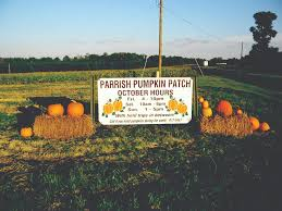 Corn Maze Pumpkin Patch Winston Salem Nc by Parrish Pumpkin Patch Has Grown Into A Great U0027fall Destination