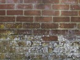anti mousse murs exterieurs traiter les murs contre l humidité mur poreux friable avec
