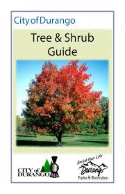 Usda Christmas Tree Permits Colorado by City Of Durango Tree U0026 Shrub Care Guide By Durango Parks