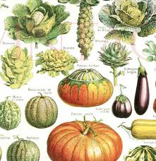 Vegetables Print 1948 Vintage Kitchen Decor Vegetable Poster