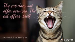 cat quotes william s burroughs quotes about cats a z quotes