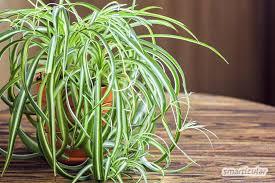 gesunde luft diese zimmerpflanzen entgiften und befeuchten