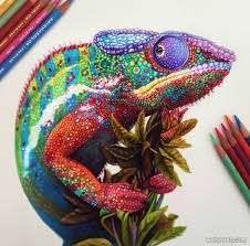 Chameleon Color Pencil Drawing By Morgan Davidson 2