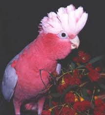 Parrot Caught Singing Bodies Hit The Floor by Til There Is A Metal Band Called Hatebeak Whose Lead Singer Is An