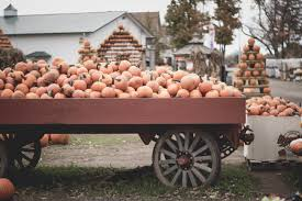 Central Wisconsin Pumpkin Patches by Top 5 Pumpkin Patches Near Washington D C Carmen Fontecilla