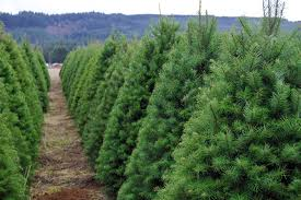 The Ultimate Guide To U Cut Christmas Tree Farms