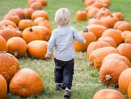 Pumpkin Picking Richmond by Don U0027t Miss These 14 Pumpkin Patches In Virginia This Fall