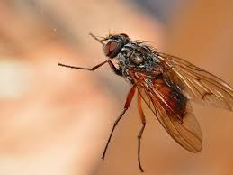Are Tiny Flies Suddenly Appearing In Your Home This Is Why