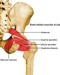 Pelvic Floor Muscle Spasm by Hysterectomy For Chronic Pelvic Pain Ask These 7 Questions First