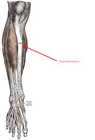 douleur interieur genou course a pied douleur tibia interne pas une périostite