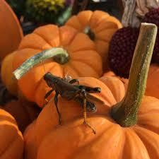Jerry Smith Pumpkin Farm Facebook by Jersey Operation Market Garden Posts Facebook
