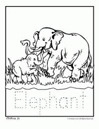 Zoo Animal Coloring Pages Baby Elephant