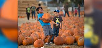 Cal Poly Pomona Pumpkin Patch Promo Code by Tickets On Sale For Pumpkin Festival