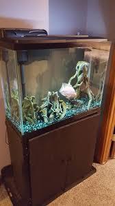 Petco Flower Ball Aquarium Decor by Best 25 40 Gallon Aquarium Stand Ideas On Pinterest Fish Tank