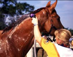 Horse Coat Shedding Tool by Help Your Horse Slick Off His Coat Expert Advice On Horse Care