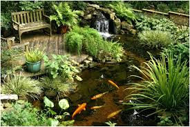 Patio Ideas ~ Small Tropical Patio Ideas Tropical Container Garden ... Tropical Backyard Landscaping Ideas Home Decorating Plus For Small Front Yard And The Garden Ipirations Vero Beach Melbourne Fl Landscape And Installation Design Around Pool 25 Spectacular Pictures Decoration Inspired Backyards Excellent Florida Create A Nice Designs Decor