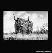 wohnzimmer dekoration longhorn kuh auf leinwand haus und